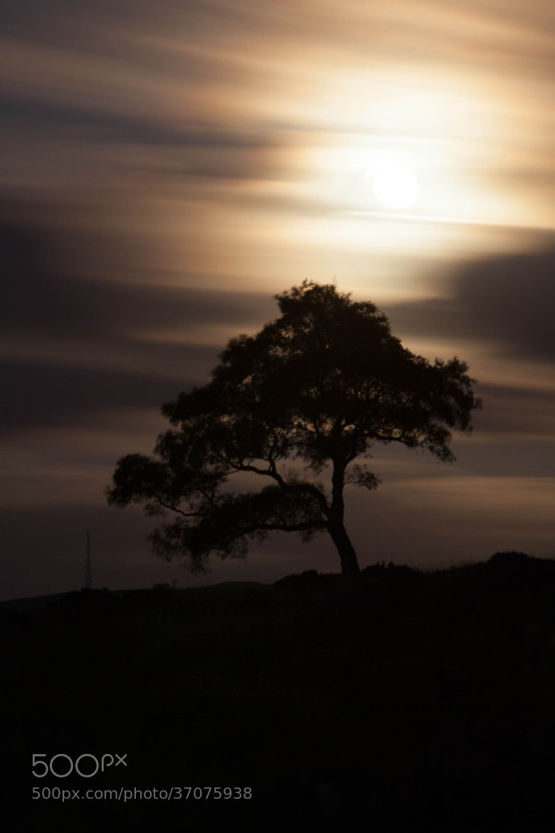 Photograph Moonlight Silhouette by Carl Mickleburgh on 500px
