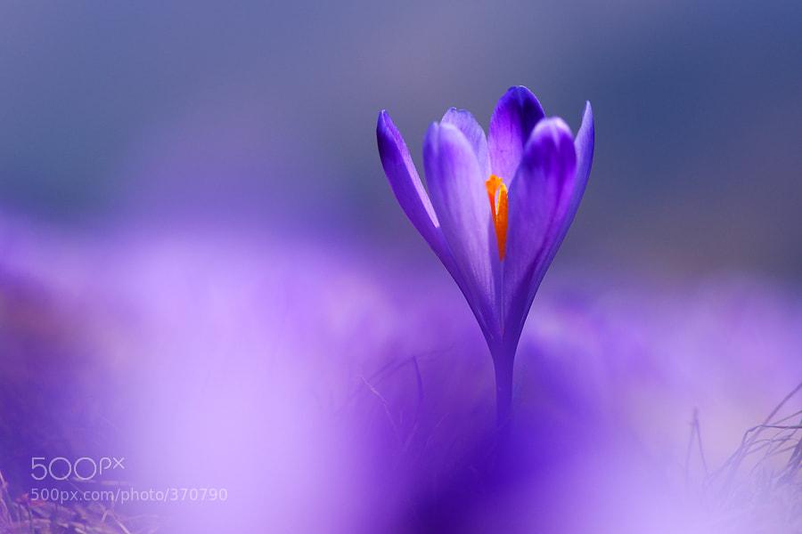 Photograph Purple by Janez Tolar on 500px