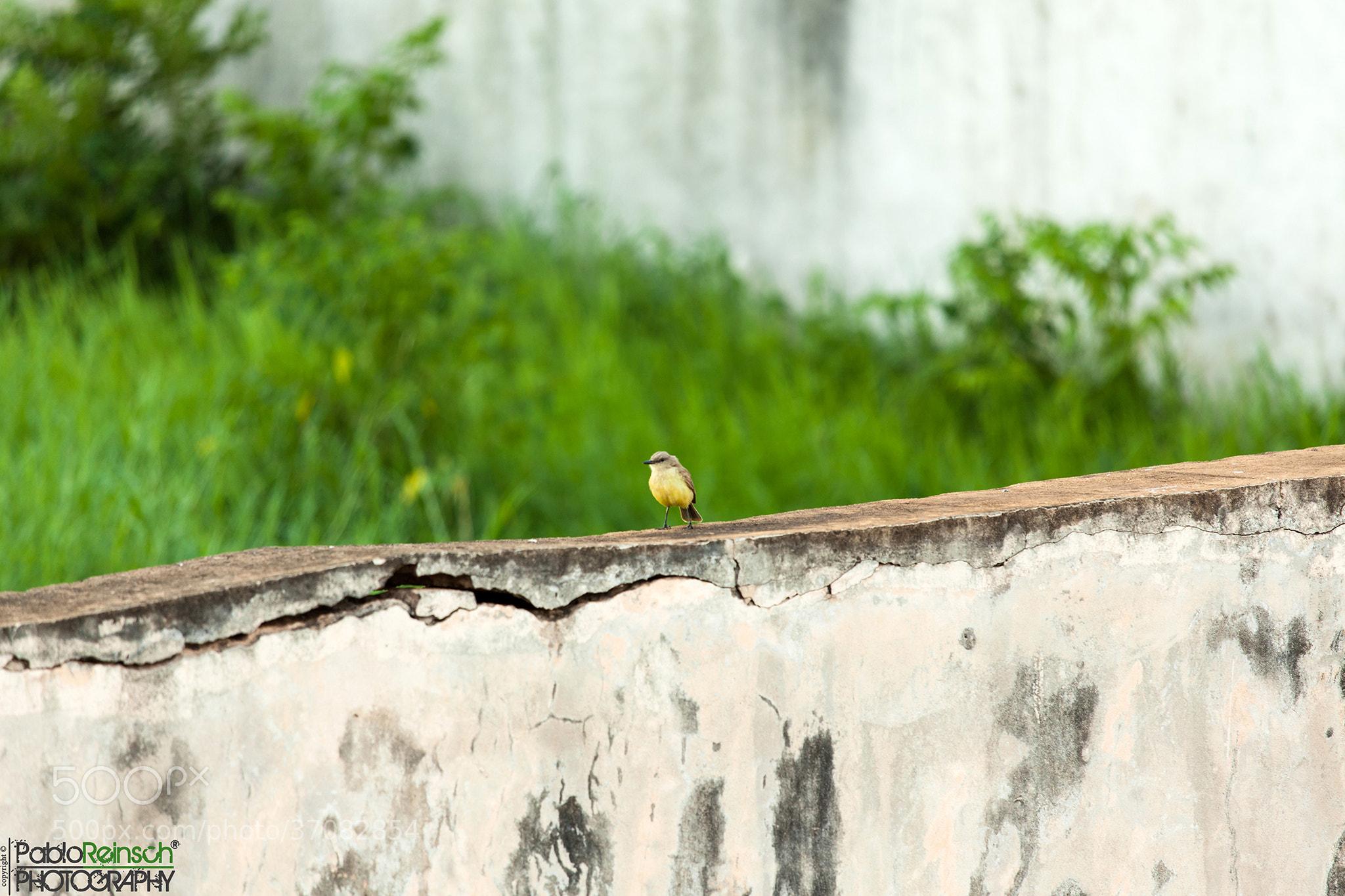 Photograph El rompe muros.- by Pablo Reinsch on 500px