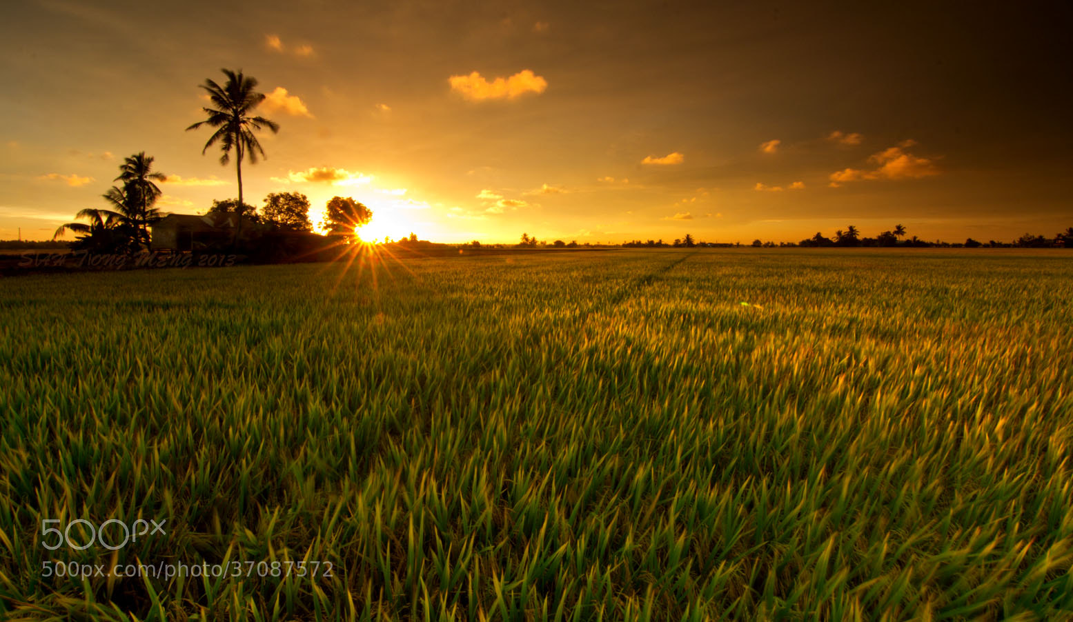 Photograph 风中的夕阳 by SIAH TIONG MENG on 500px