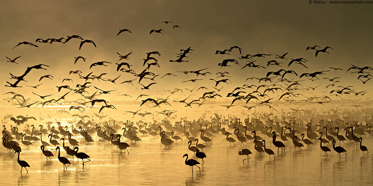 Photograph Flight of the Flamingos by Marco Mattiussi on 500px