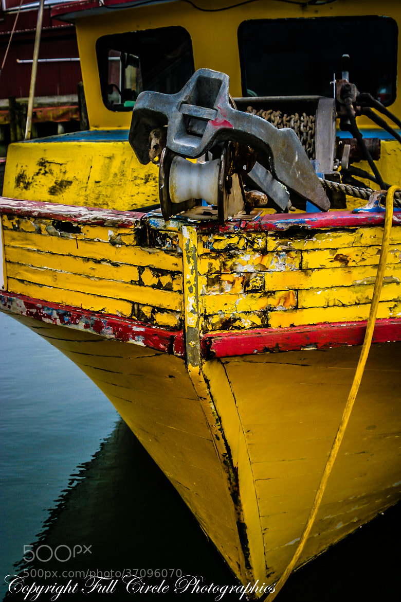 Photograph Ol' Yeller by Pandyce McCluer on 500px