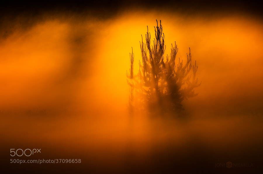 Photograph Pine In The Mist by Joni Niemelä on 500px
