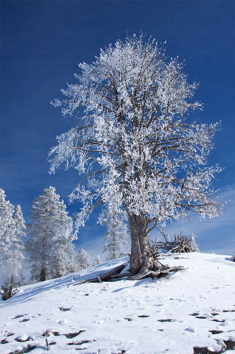 Photograph Yellowstone in Winter by Joseph Urgo on 500px