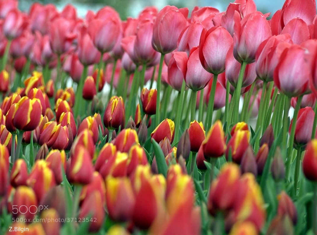 Photograph colors... by Zeki Bilgin on 500px