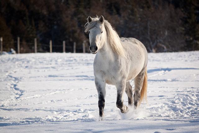 Photograph Dashing through the snow by Carole Still on 500px