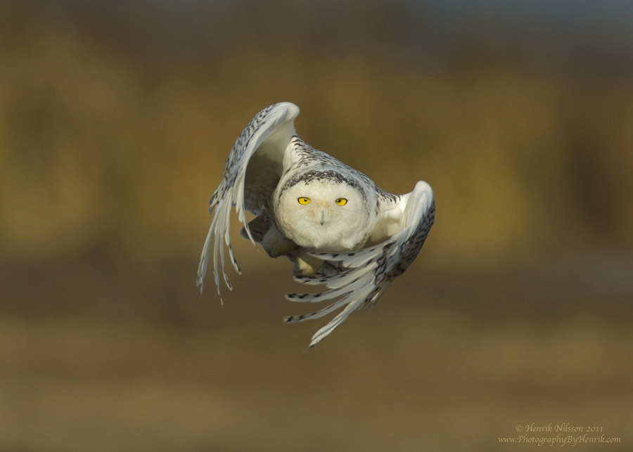 Photograph Into Flight by Henrik Nilsson on 500px
