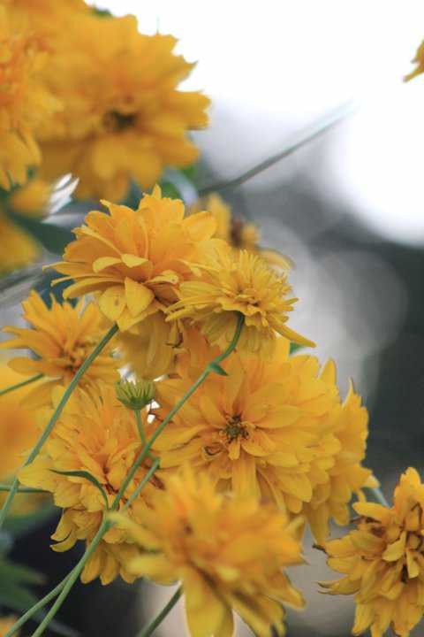 Photograph Yellow by Dorothy Jarry on 500px
