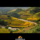 The beautiful gold rice terraces in Mu Cang Chai are a sight to behold in the late afternoon.