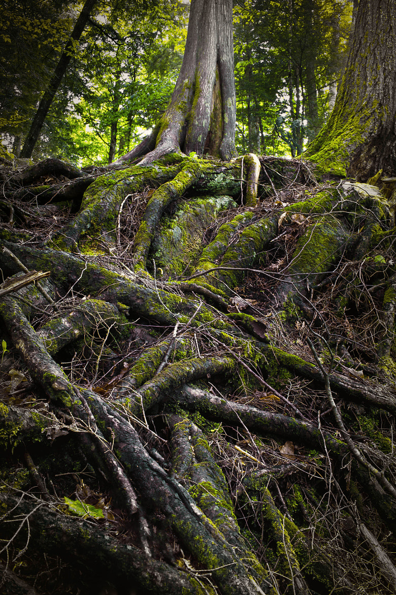 Photograph Truncated Root System  by Matt H on 500px