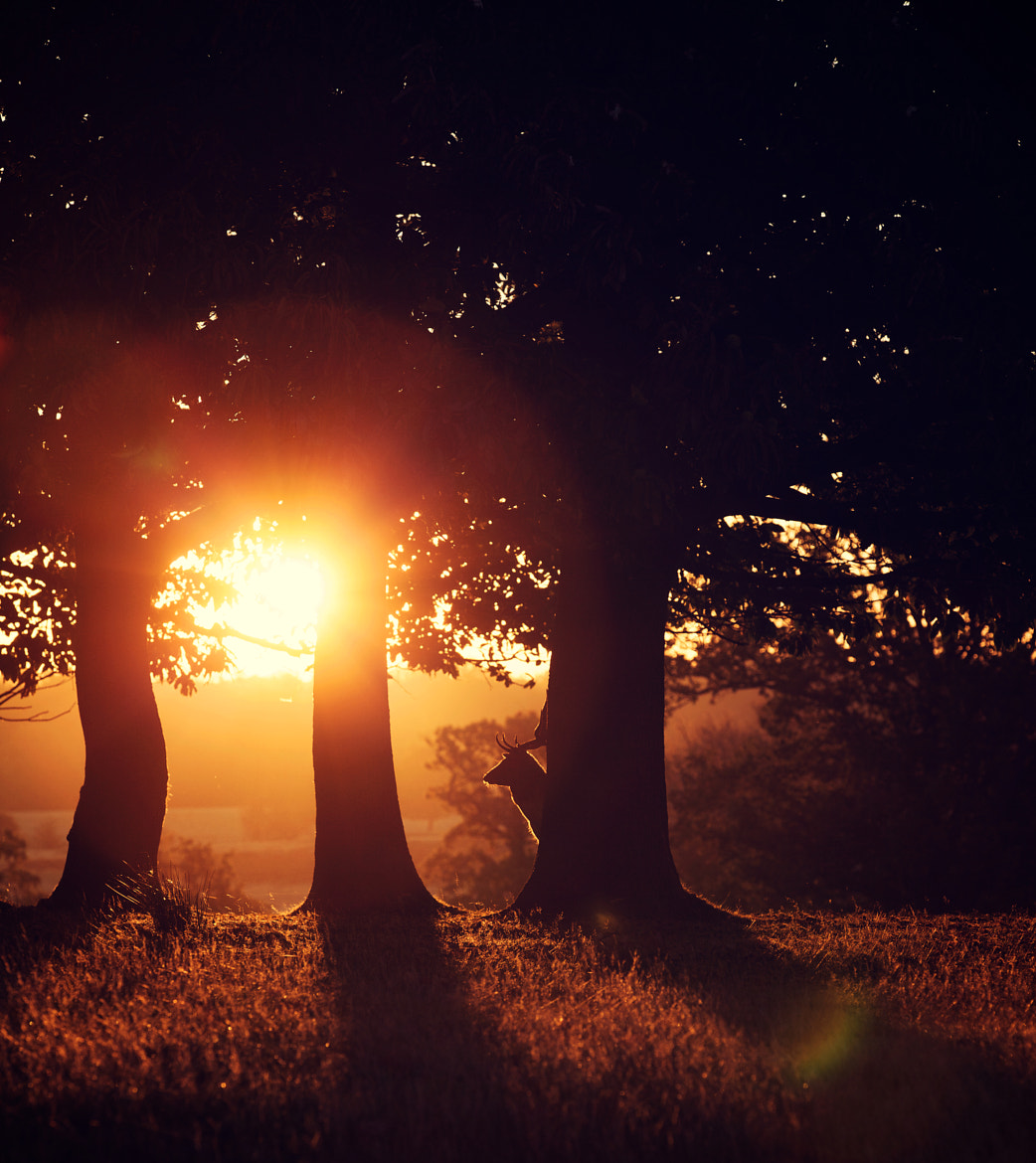Photograph flare by Mark Bridger on 500px