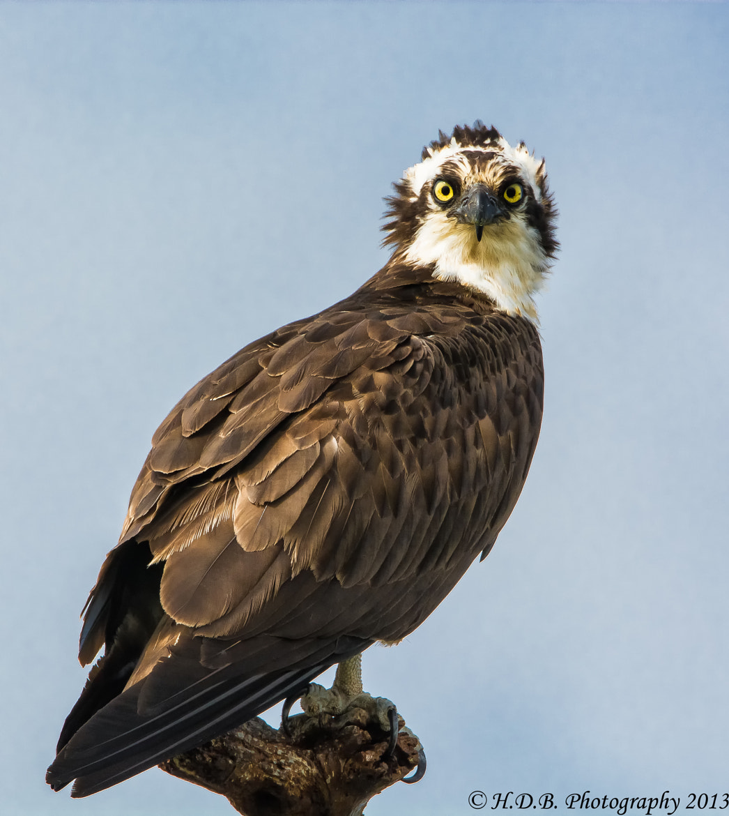 Photograph Stink Eye by Harold Begun on 500px