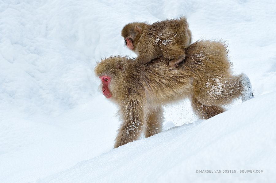Photograph Snowmobile by Marsel van Oosten on 500px