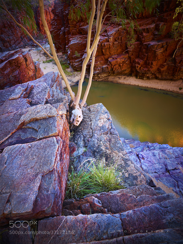 Photograph Ormiston Waterhole by Dan Proud on 500px