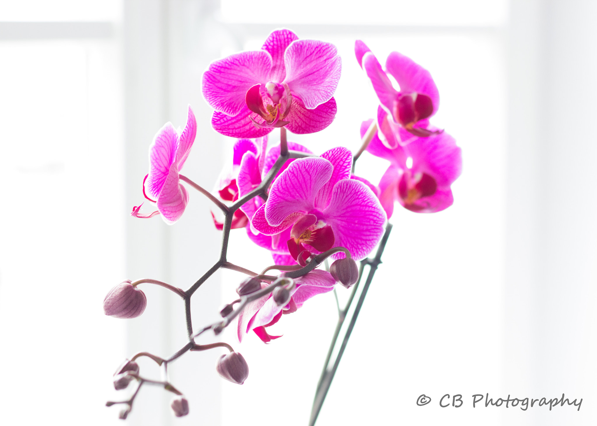 Photograph Orchid by Christine Bußler on 500px