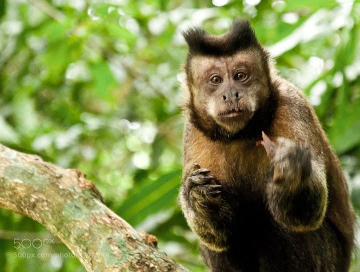 Photograph Smart Monkey by Michelle Defavari Castellan on 500px