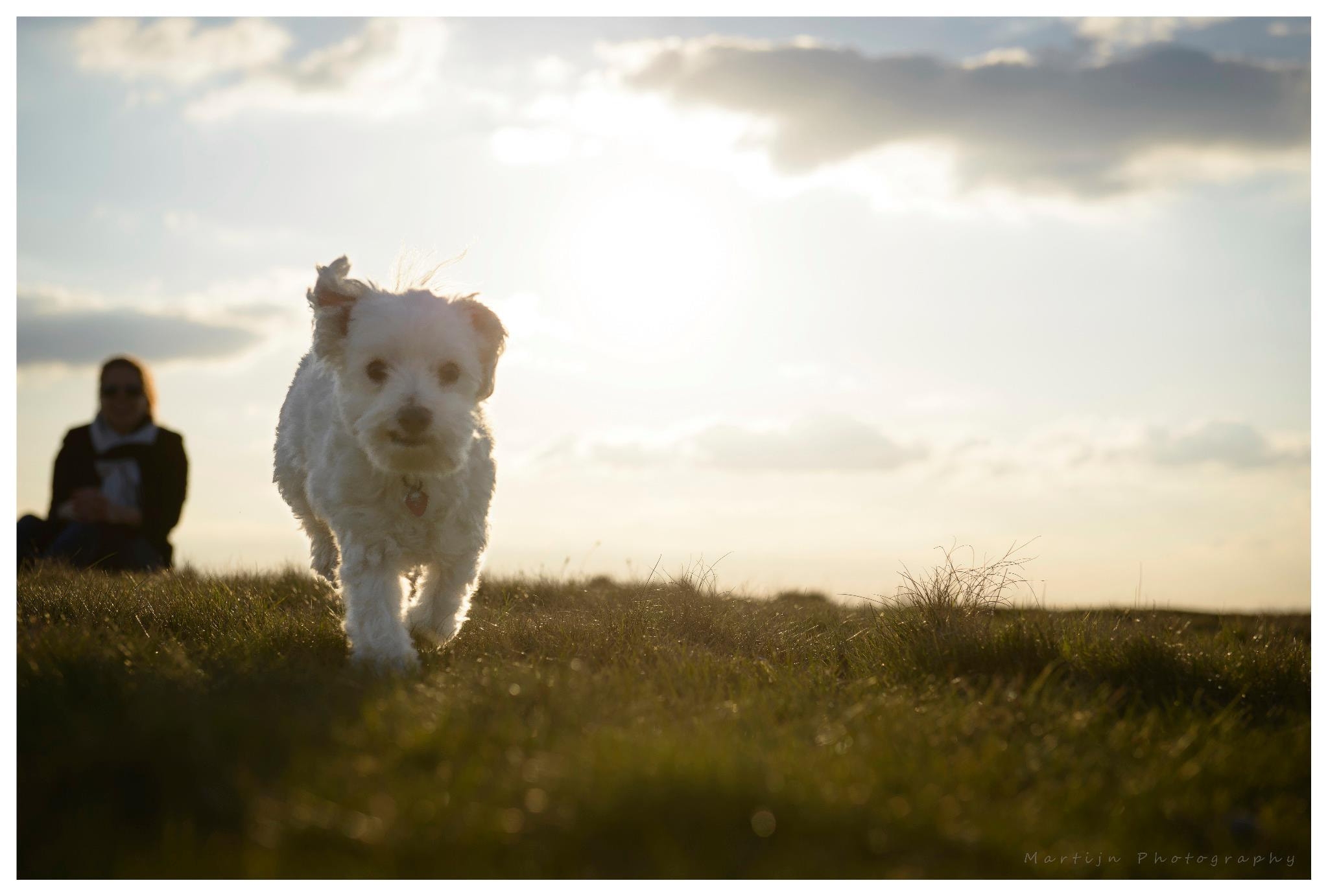 Photograph Dog in the sunset by Martijn van der Veek on 500px