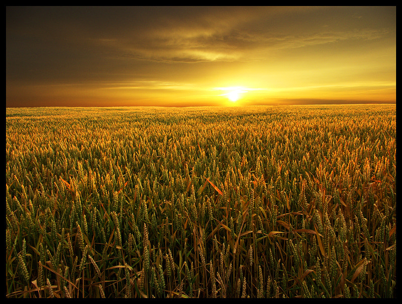 Photograph Golden Fields by Alexandre Leroux on 500px