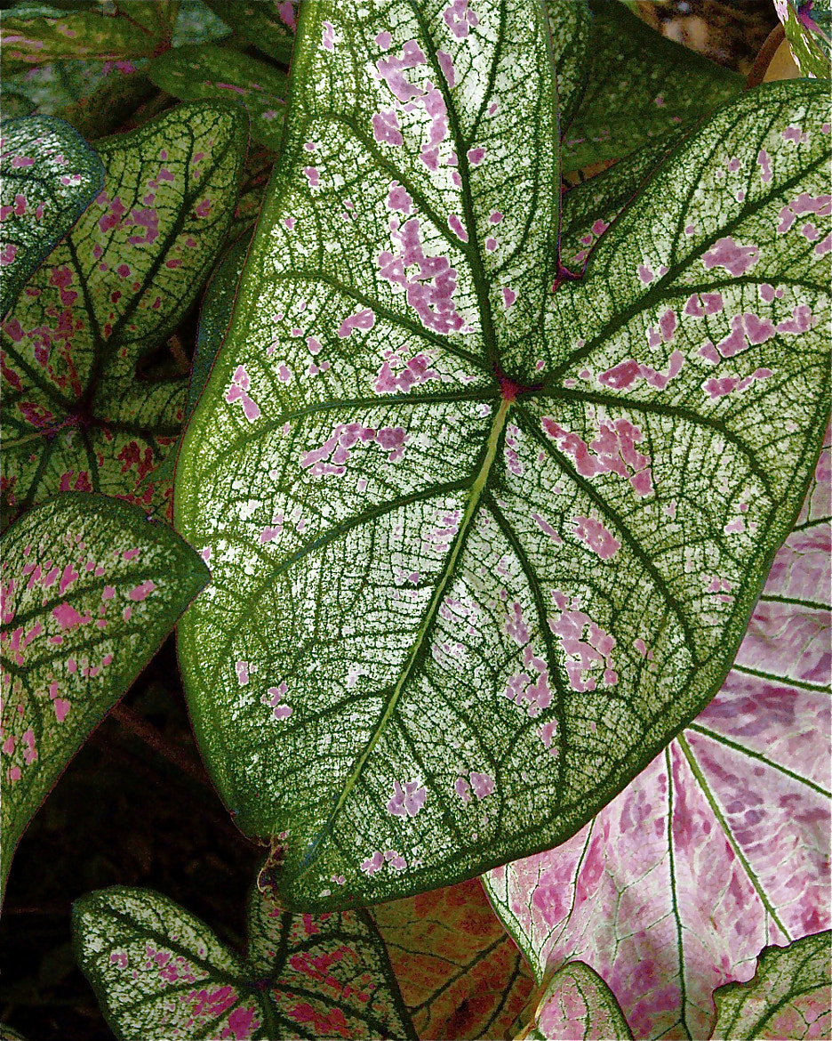Photograph Big Leaves by P.W. Fenton on 500px