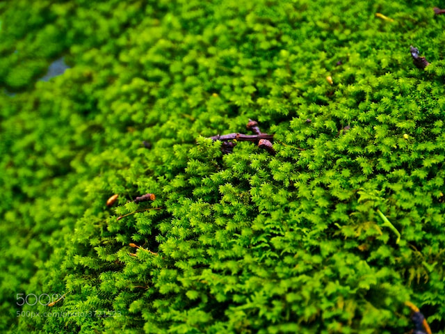 Photograph Moss Theory by Felipe Carral on 500px