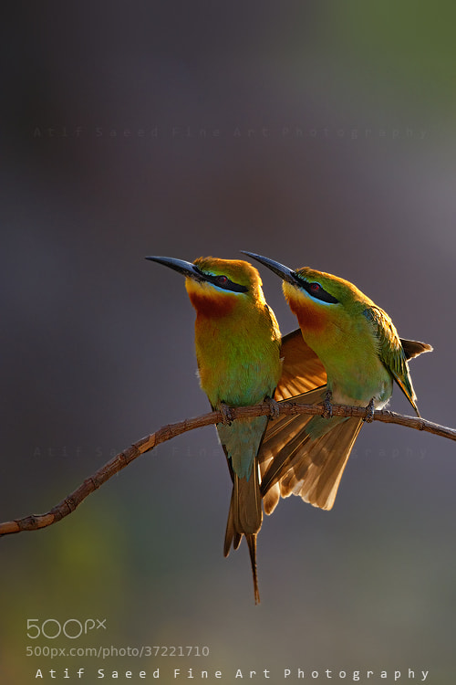 Photograph Hug.. by Atif Saeed on 500px