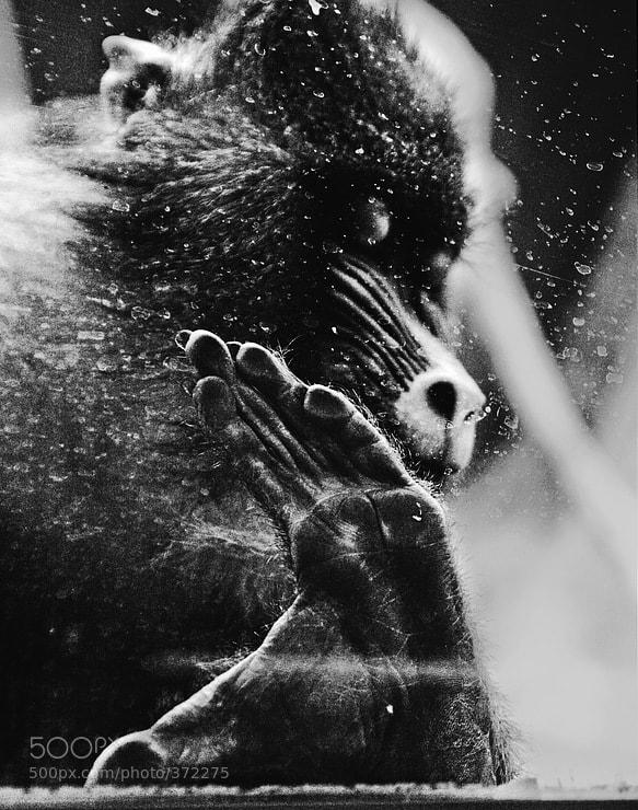 Photograph Lines by Aleksandr Malin on 500px