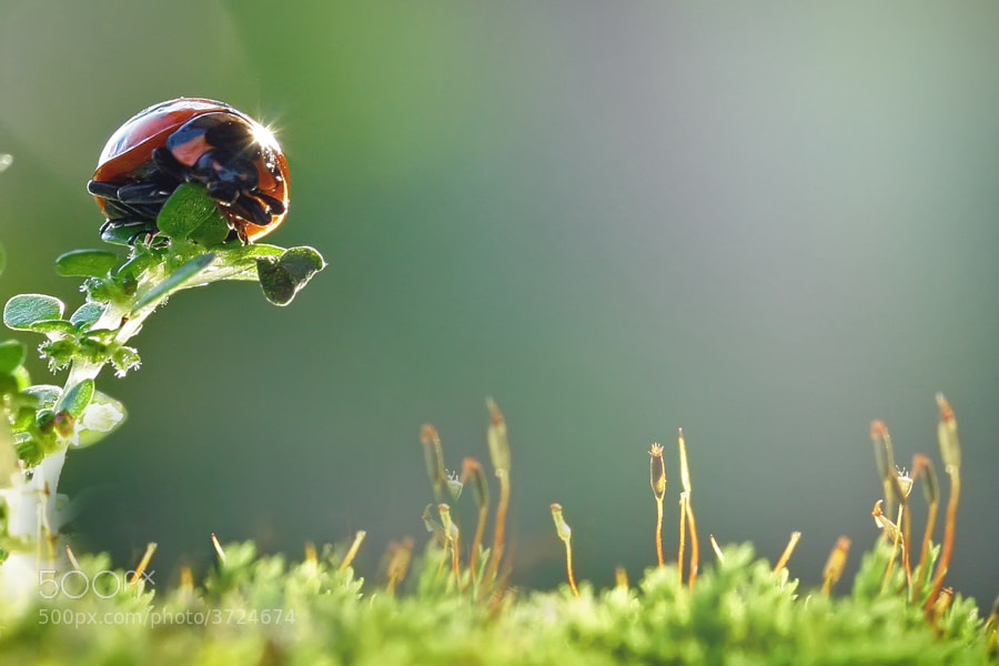 Photograph small world #3 by teguh santosa on 500px