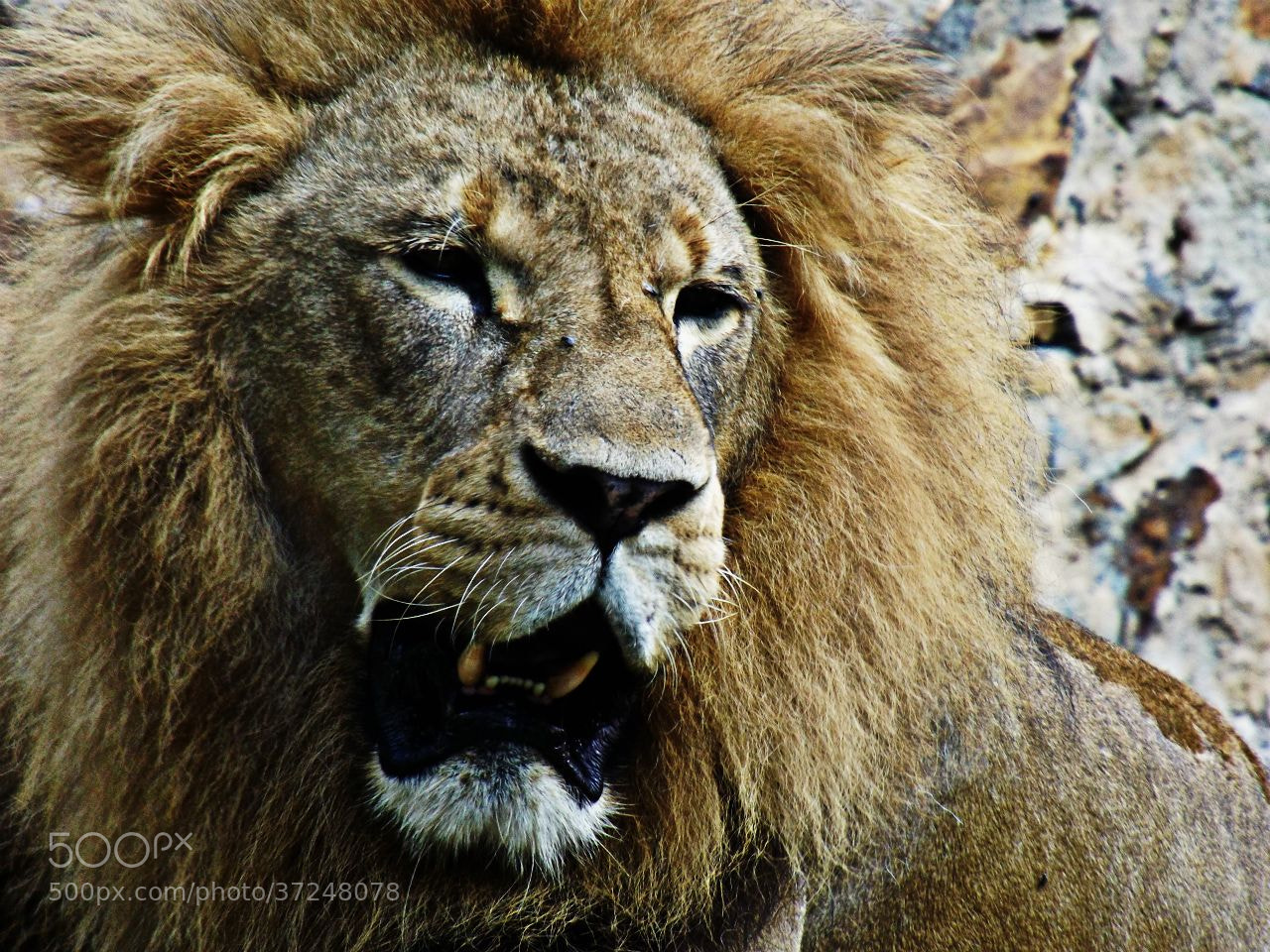 Photograph LEON  by yeslith hurtado on 500px