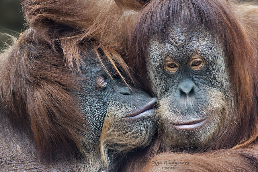 Photograph A kiss by Olga Gladysheva on 500px