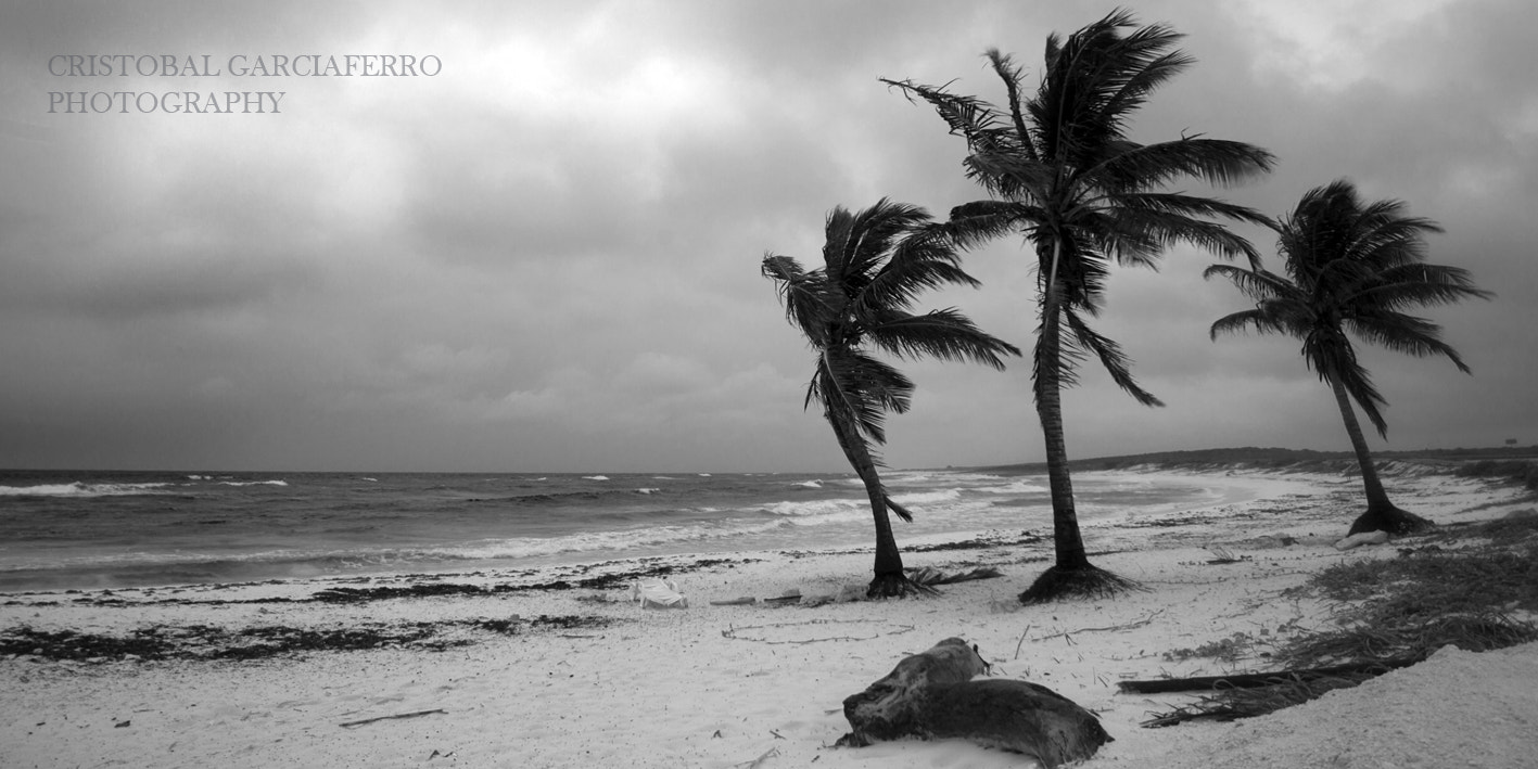 Photograph 3 Palms by Cristobal Garciaferro Rubio on 500px