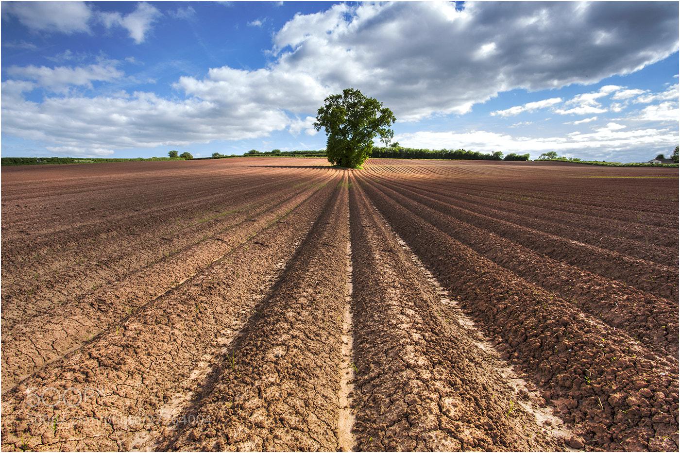 Photograph Landscape Brocolli by Alan Coles on 500px