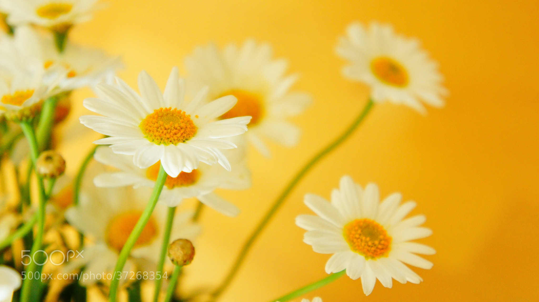 Photograph All i can feel by Hiwa  on 500px