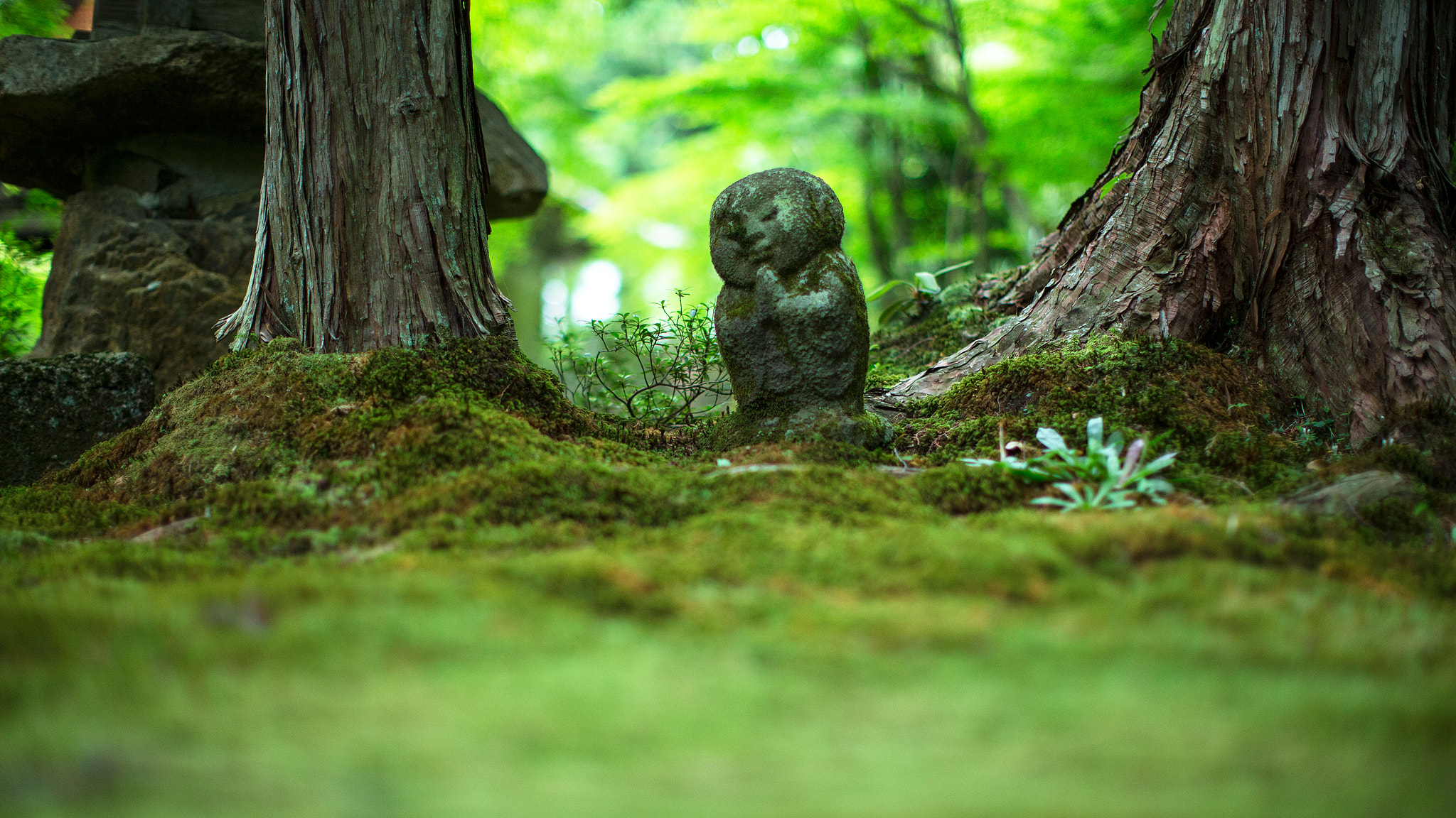 Photograph Forest Spirit by Tom Lowe on 500px
