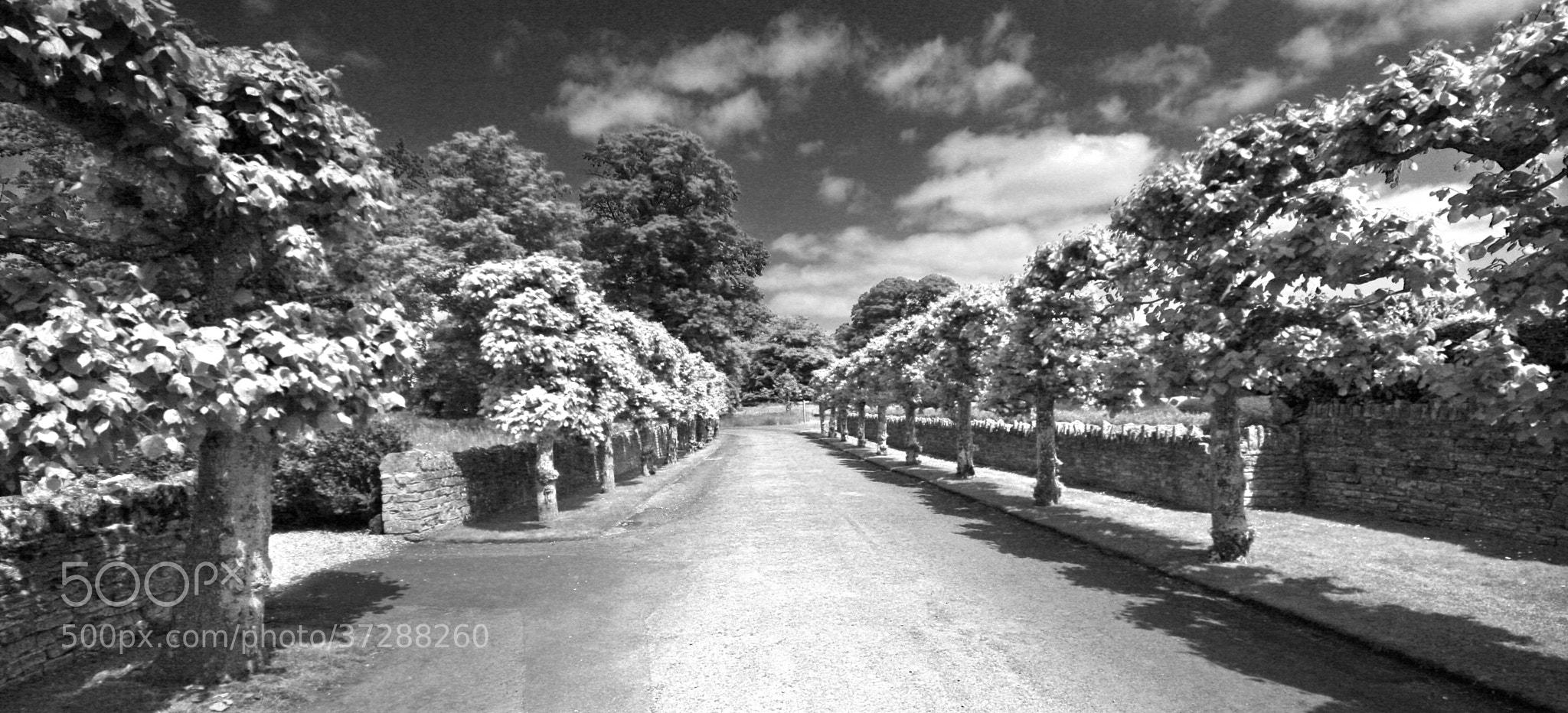 Photograph The Avenue by Wayil Rahmatalla on 500px
