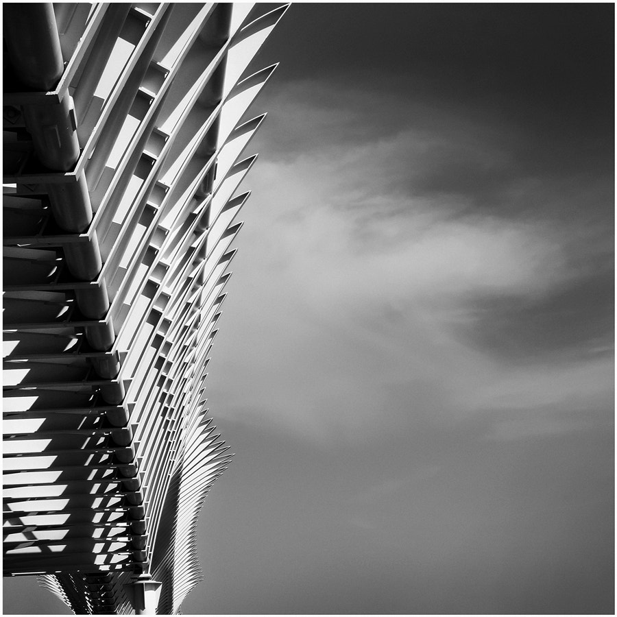 Photograph Spine Bridge by Andrea Panta on 500px