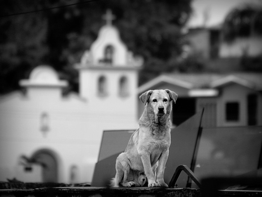 Photograph Dog by Diana  Duque  on 500px