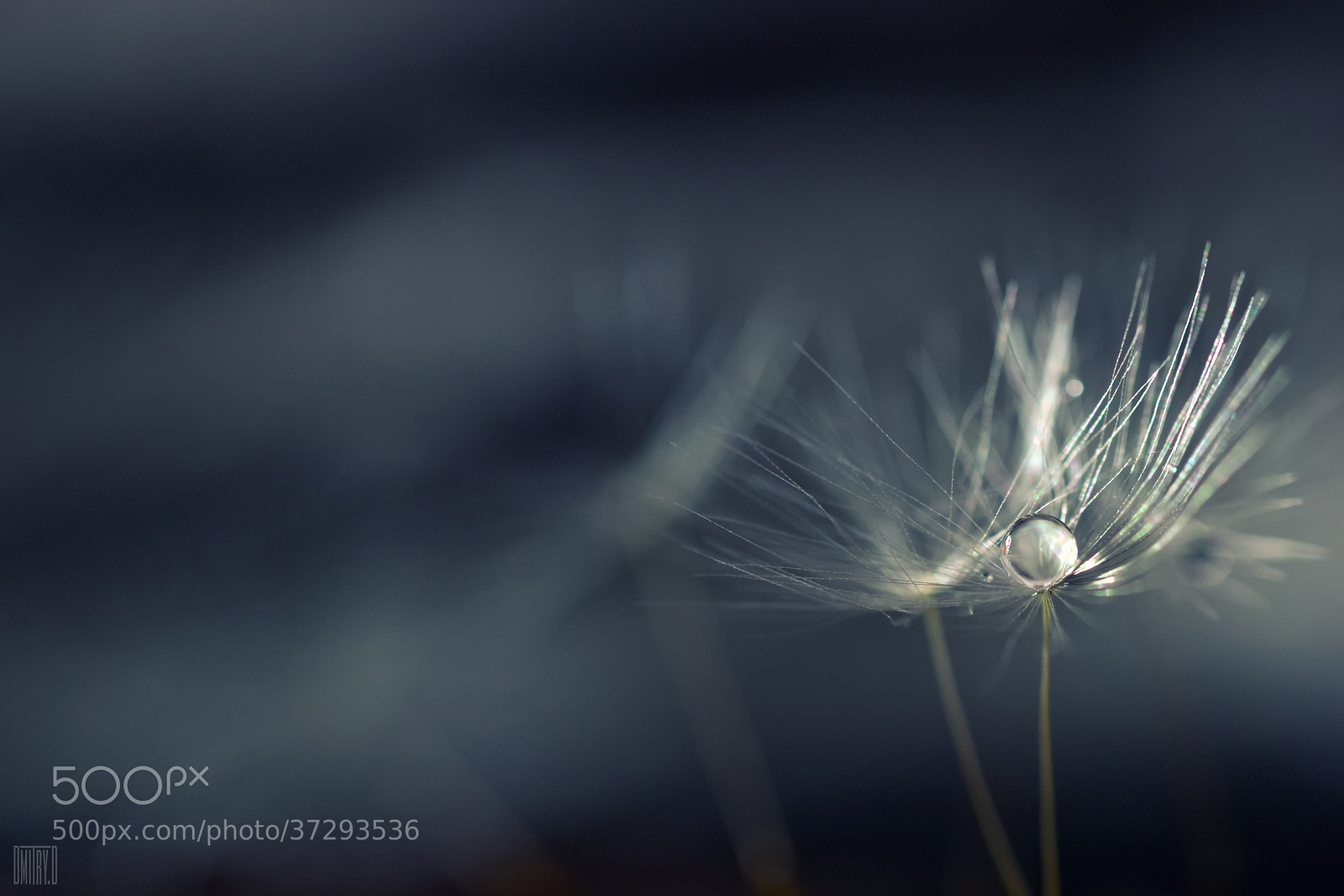 Photograph Stories of drops by Dmitry Doronin on 500px