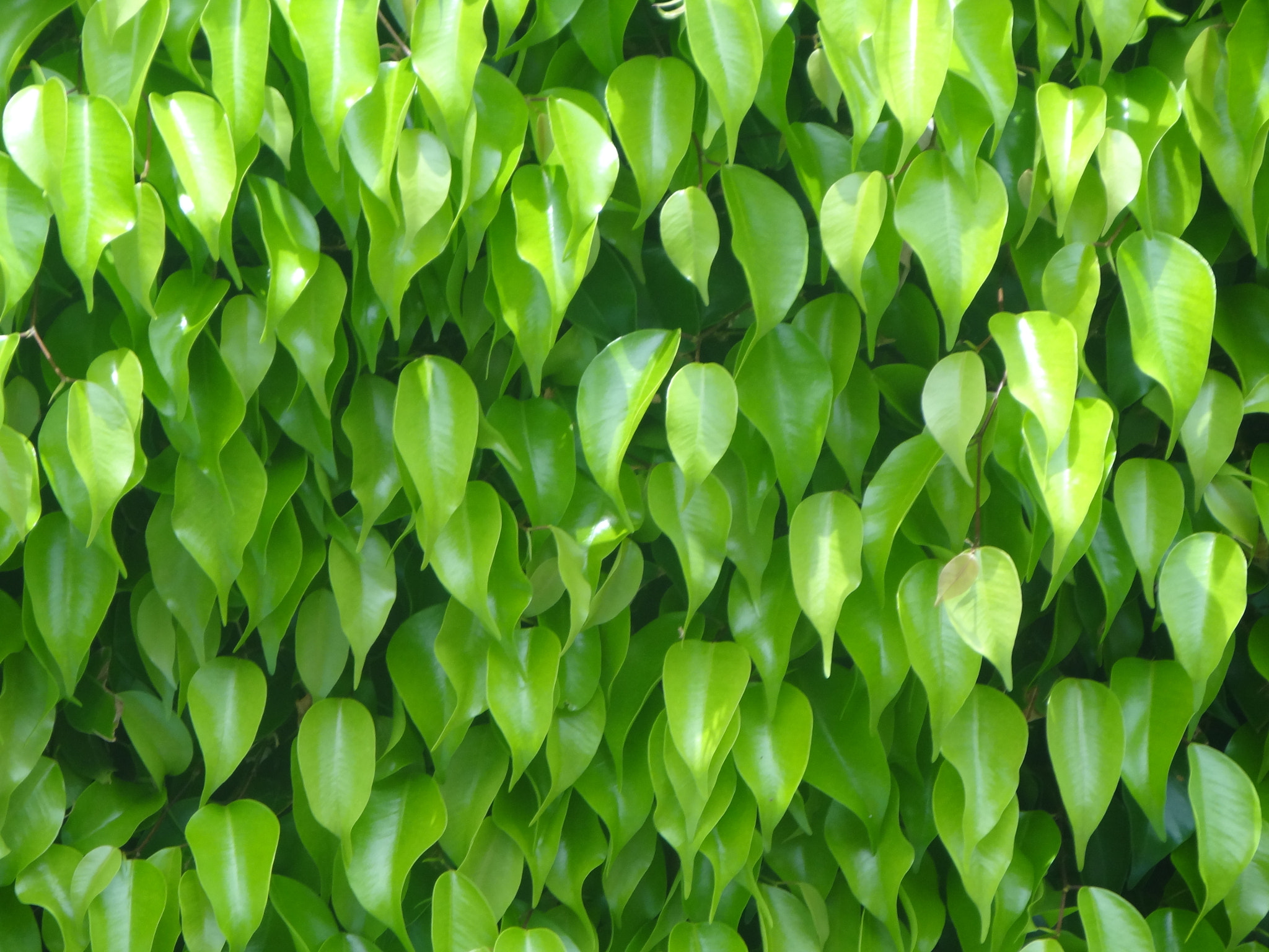 Photograph Green leaves by Jessenine Reyes on 500px