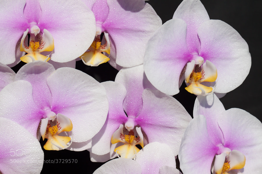 Photograph Orchids by Bob Hunt on 500px
