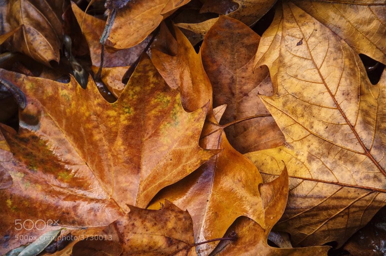 Photograph Fallen Leaves by Ken Shelton on 500px