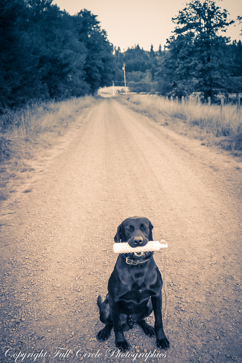 Photograph Good Boy! by Pandyce McCluer on 500px