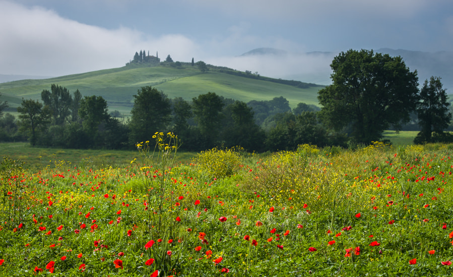 Photograph Tuscan flowers by Hans Kruse on 500px