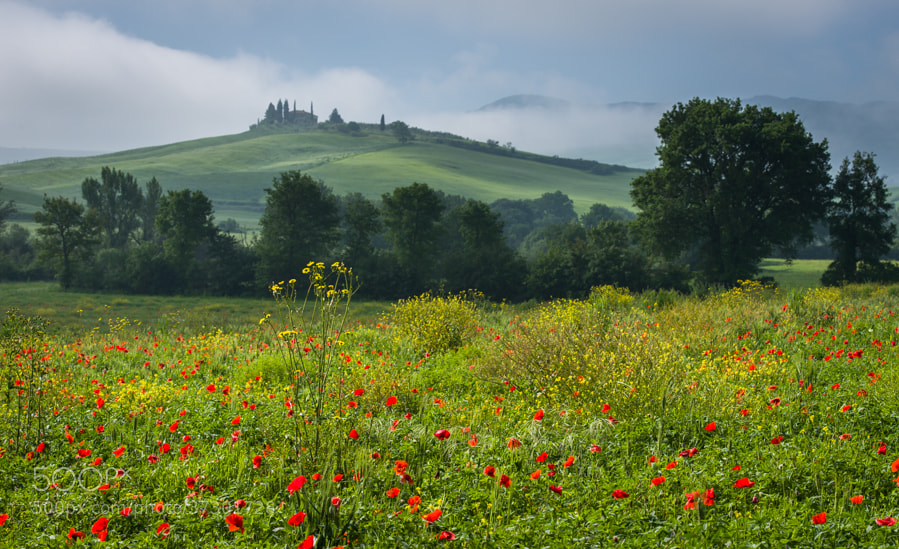 "<a href=""http://www.hanskrusephotography.com/Workshops/Tuscany-May-12-16-2014/29524379_ftL23j#!i=2525409275&k=3x6m3XP&lb=1&s=A"">See a larger version here</a>