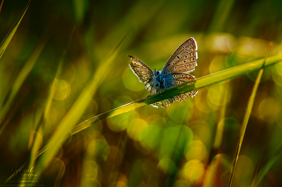 Photograph butterfly II. by Norbert G on 500px