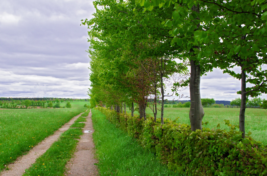 Photograph long green way by Gunter Werner on 500px