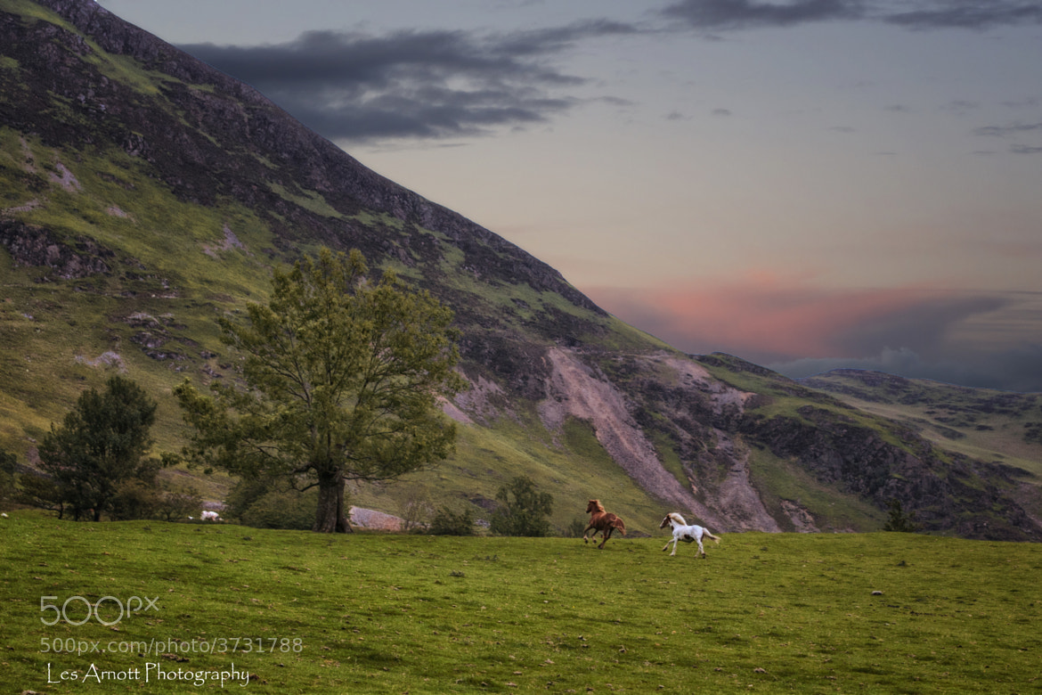 Photograph Littletown Ponies by Les Arnott on 500px