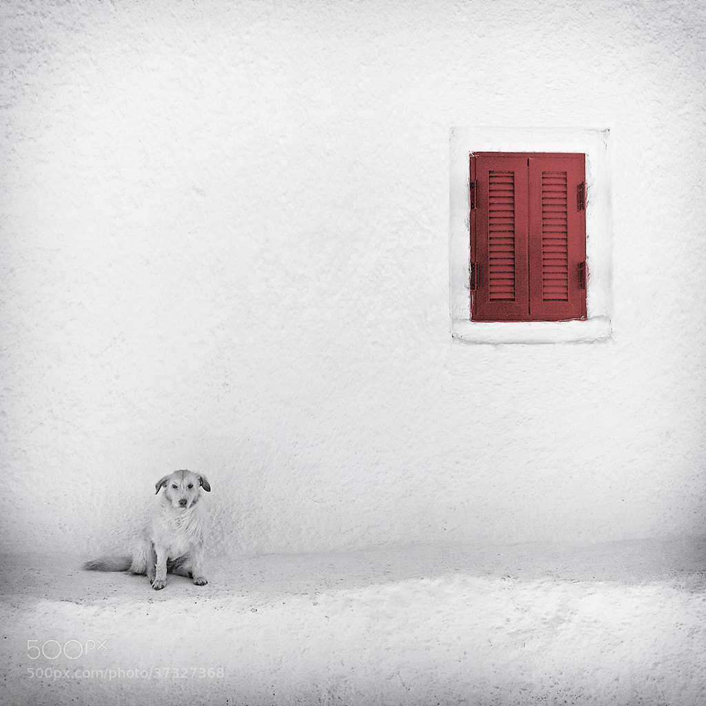 Photograph Lonely Dog by Carsten Meyerdierks on 500px