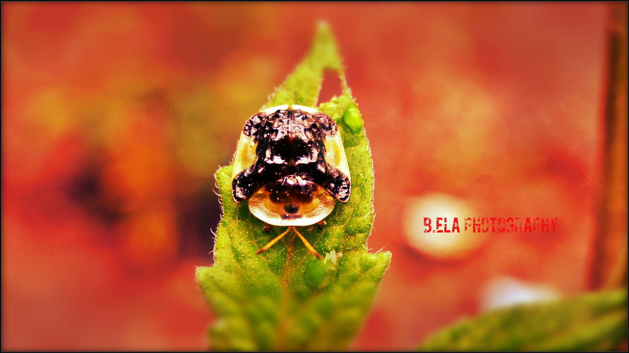 Photograph  Death is just a bug .... by E B on 500px