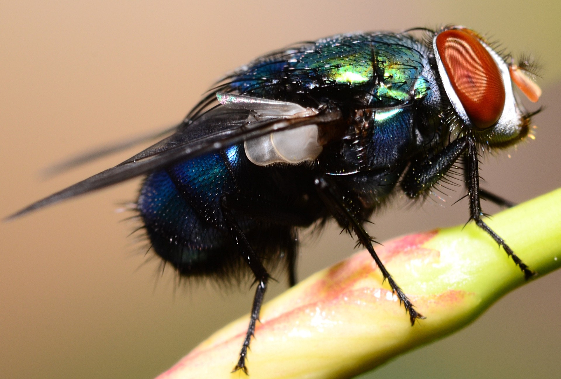 Photograph Big Fly by Sujoy Packrasy on 500px