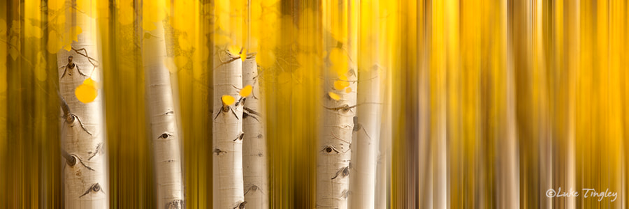 Photograph Aspen Dreams by Luke Tingley on 500px